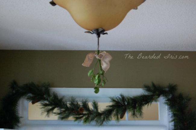 live mistletoe in the foyer by the bearded iris